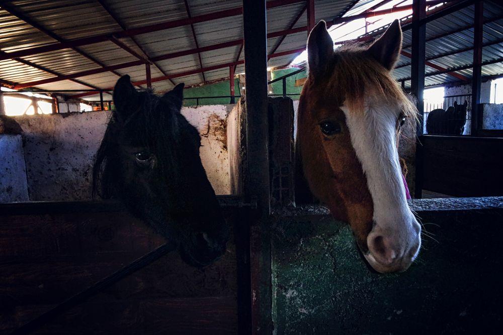 Photo in Animal #photo #animals #friends #horses #model #portre