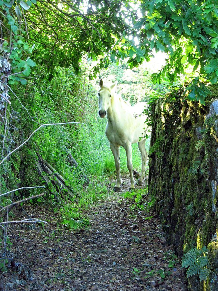 Photo in Animal #caballo #horse #campo #town #galicia
