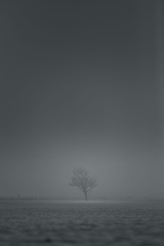 Photo in Black and White #tree #blackandwhite #monochrome #sweden #östergötland #mist #fog