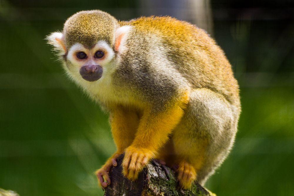 Photo in Animal #bochum #nrw #monkey #animal #tierpark #germany