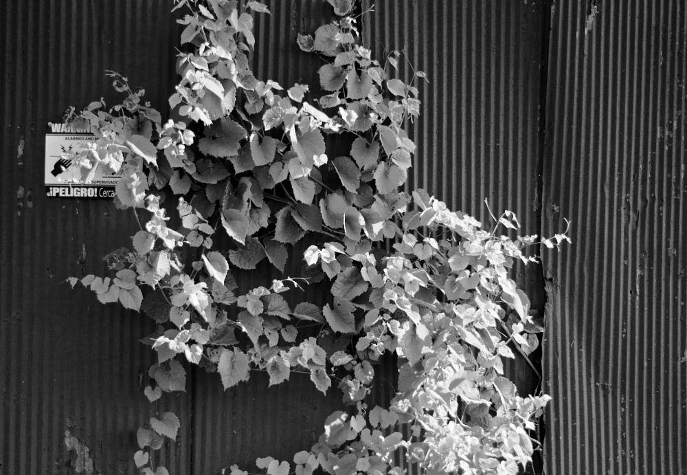 Photo in Random #sign #fence #overgrown