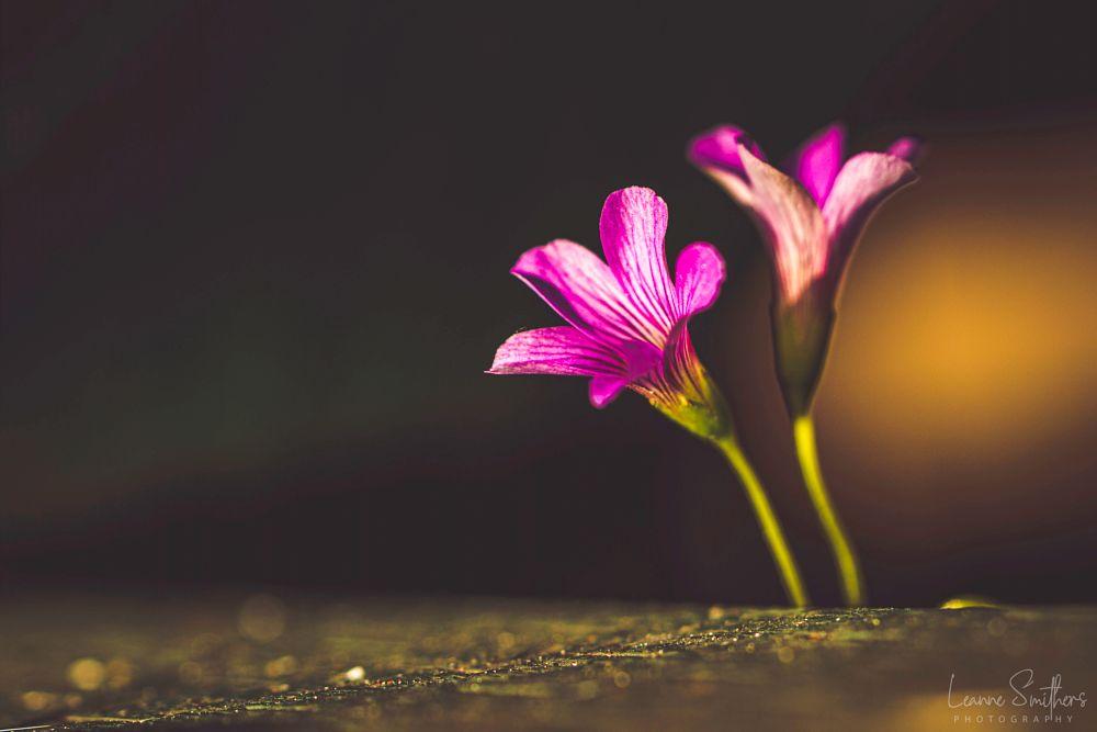 Photo in Macro #plants #flower #still life #macro #purple #light
