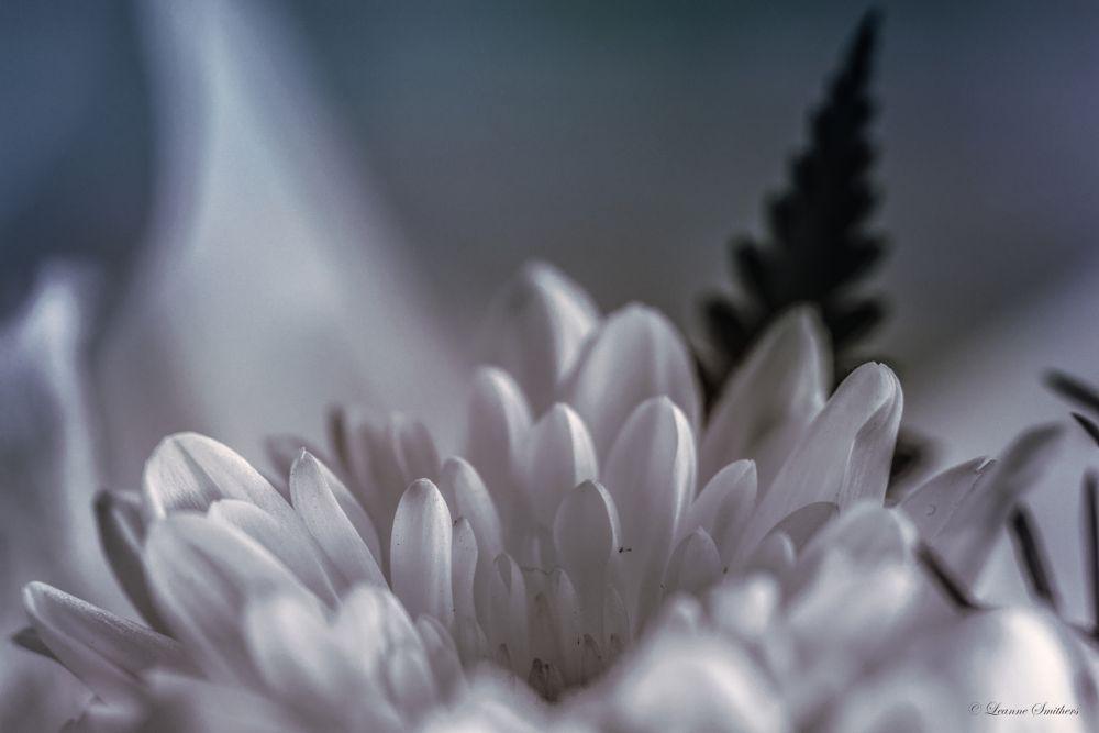 Photo in Macro #petals #flower #macro