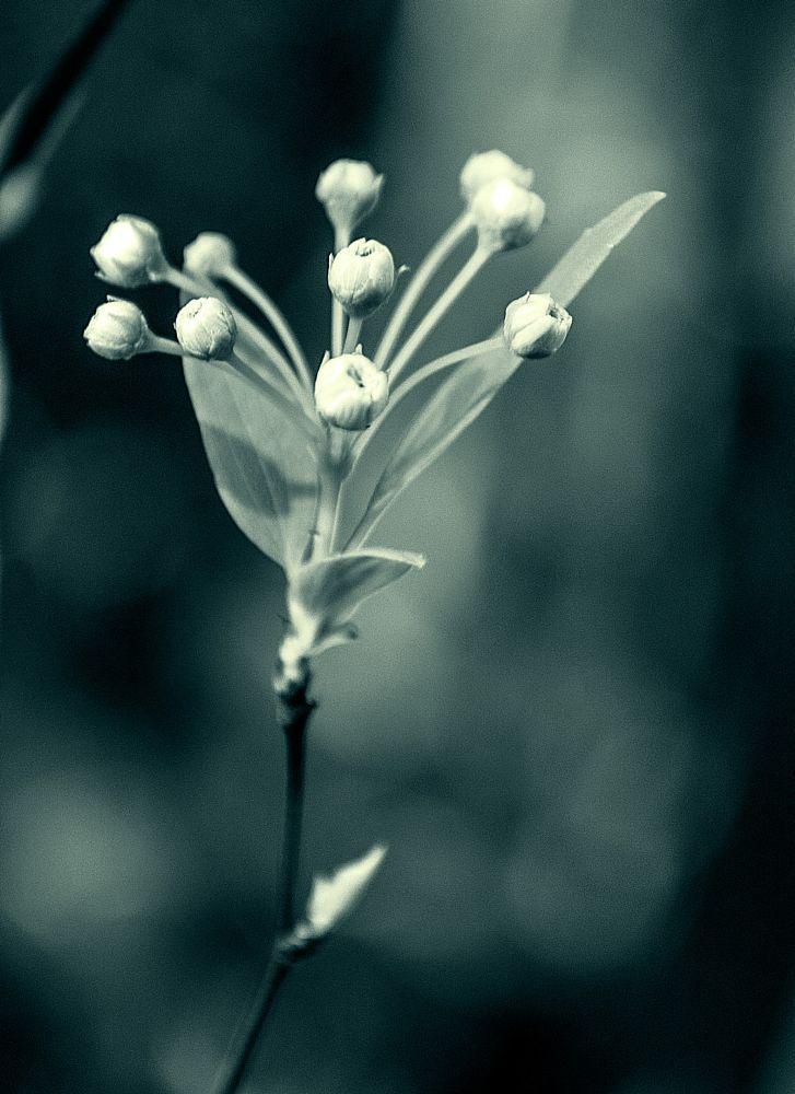Photo in Fine Art #buds #flowers #garden #monochrome #fine art