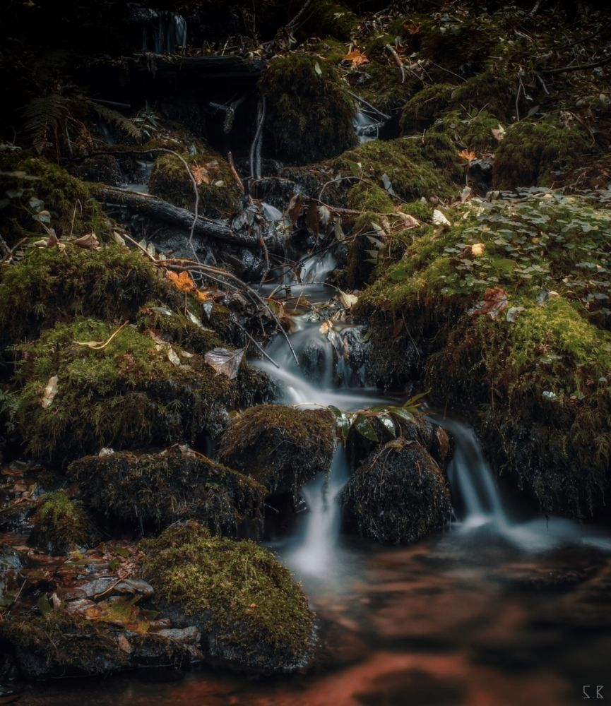 Photo in Nature #creek #nature #landscape #water #forest