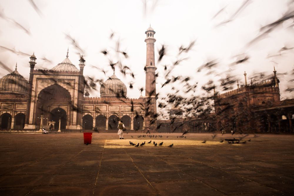 Photo in Architecture #india #places #birds #flying #historical #monument #architecture #morning
