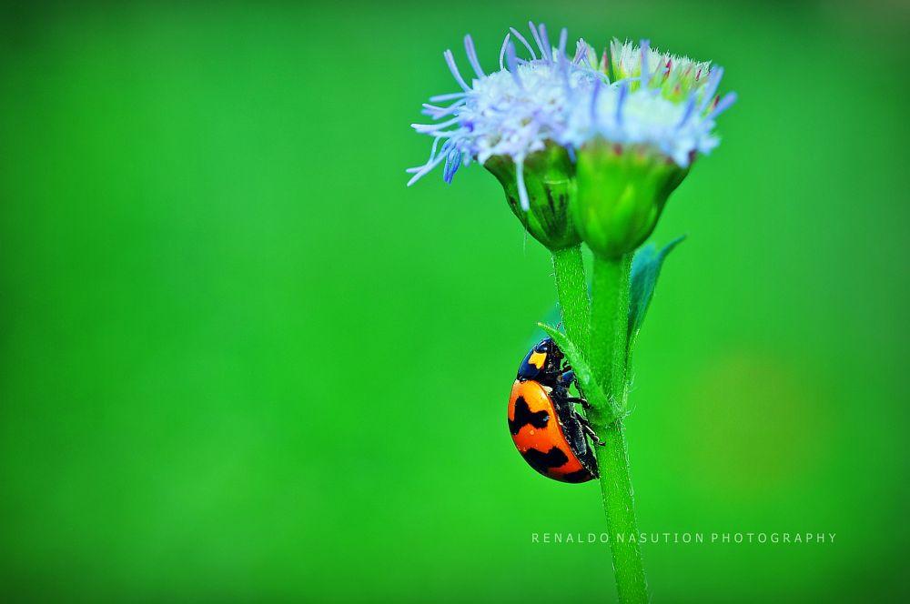 Photo in Macro #macro #insect #bugs