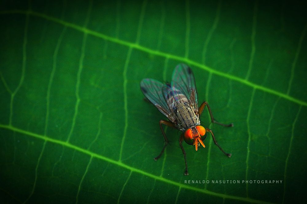 Photo in Macro #macro #insect #fly #bugs