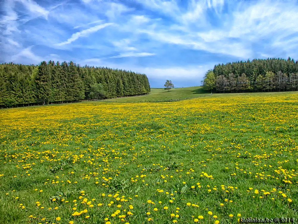 Photo in Landscape #vielsalm #sky #landscape