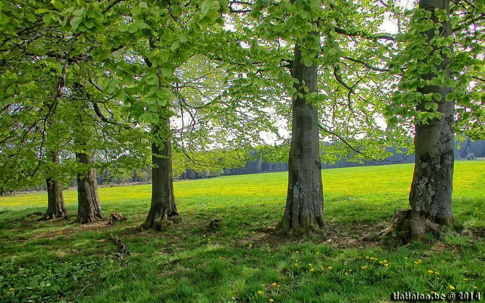 Photo in Landscape #vielsalm #landscape #trees