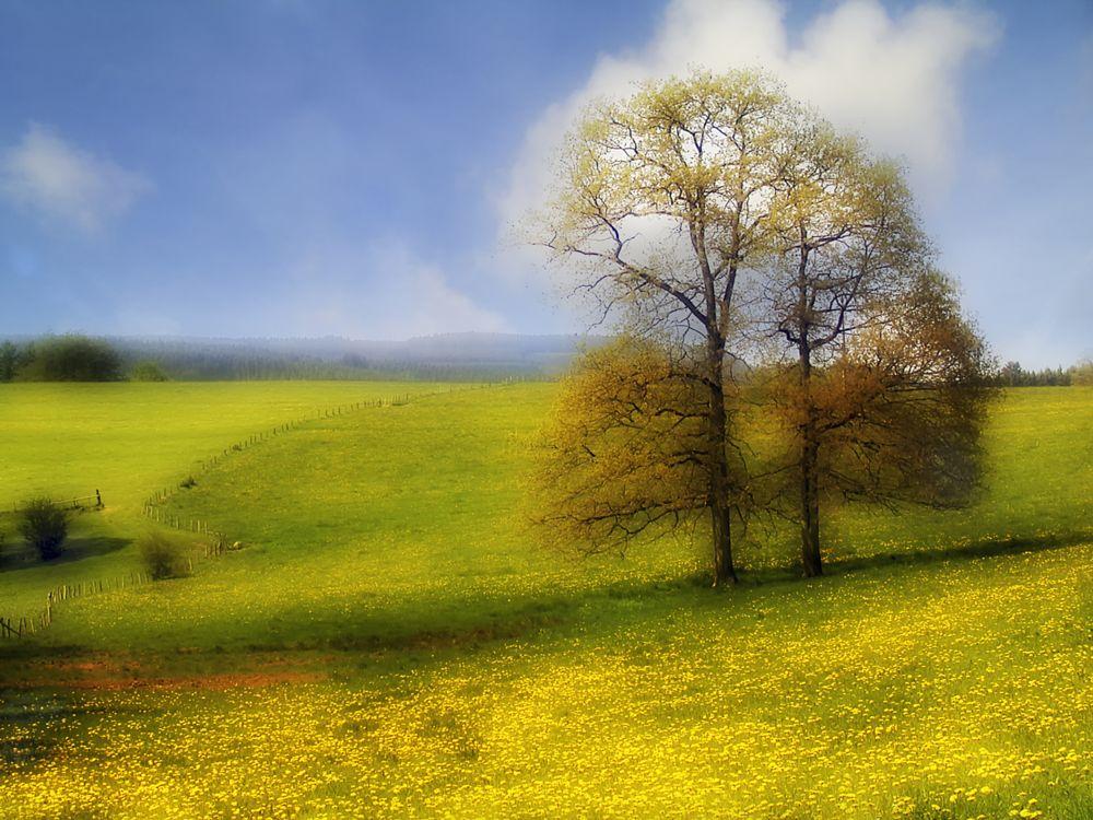 Photo in Landscape #vielsalm #tree #landscape