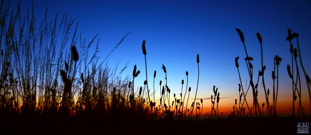 Photo in Nature #sunset #deep grass #grass #colors