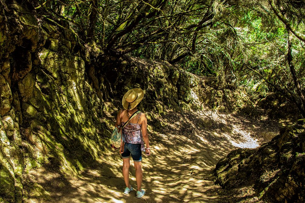 Photo in Travel #hiking #people #woman #tenerife #spain #jungle #forest #green #path #way #trail #track #quirtmair
