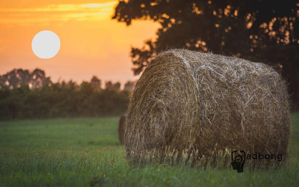 Photo in Still Life #sunset #arkansas #countryside #nature #summers