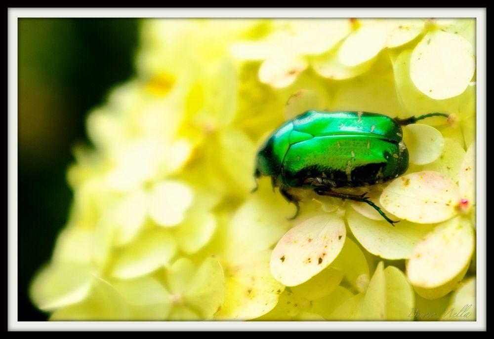 Photo in Animal #animal #flower #green #bug