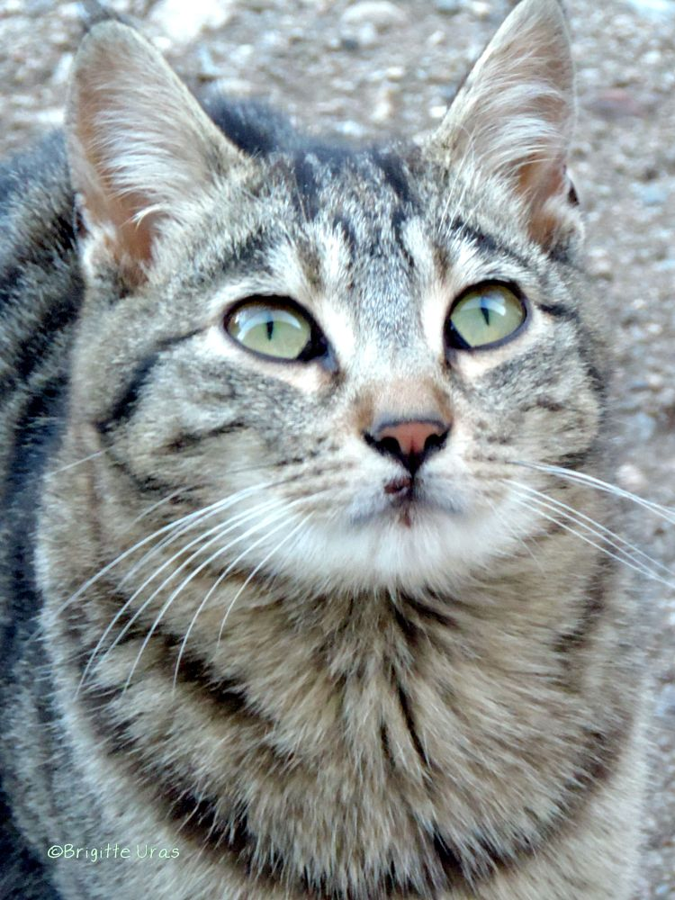 Photo in Animal #chat  animaux