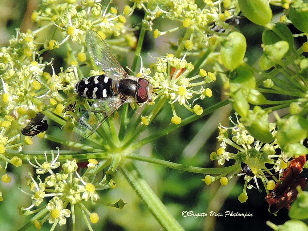 Photo in Nature #insectes papillon espèce na