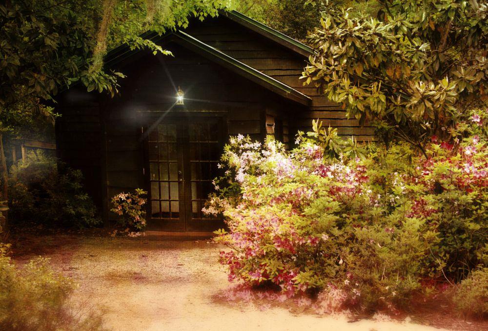 Photo in Random #peaceful azaleas dusk