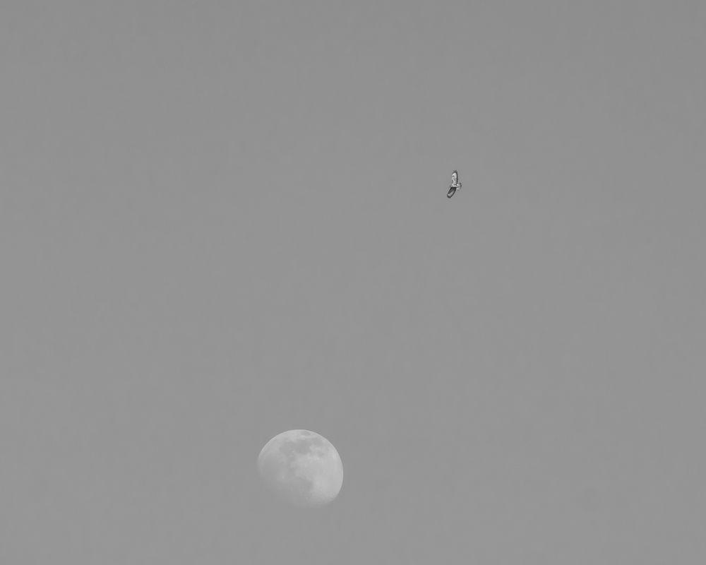 Photo in Nature #sky #moon #bird #space #evening #minimalism #blackandwhite