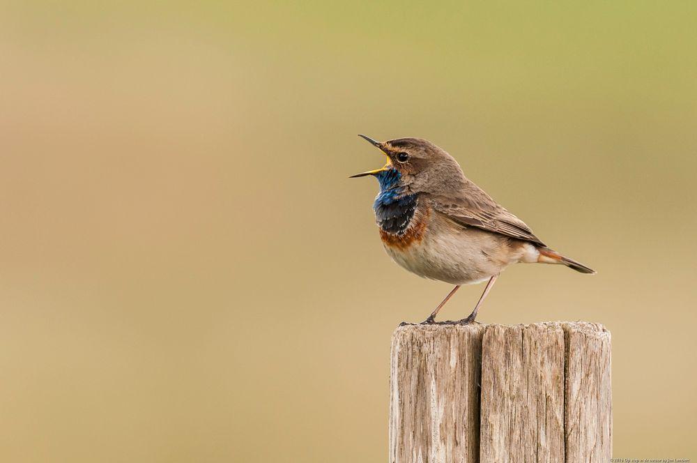 Photo in Animal #birds #wildlife #singing