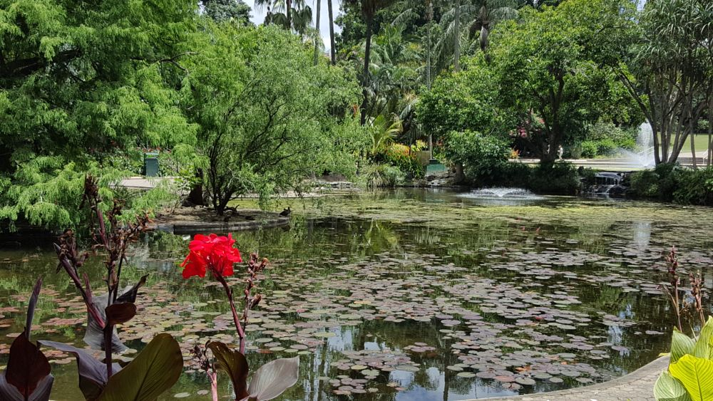Photo in Landscape #the pond #brisbane #australia