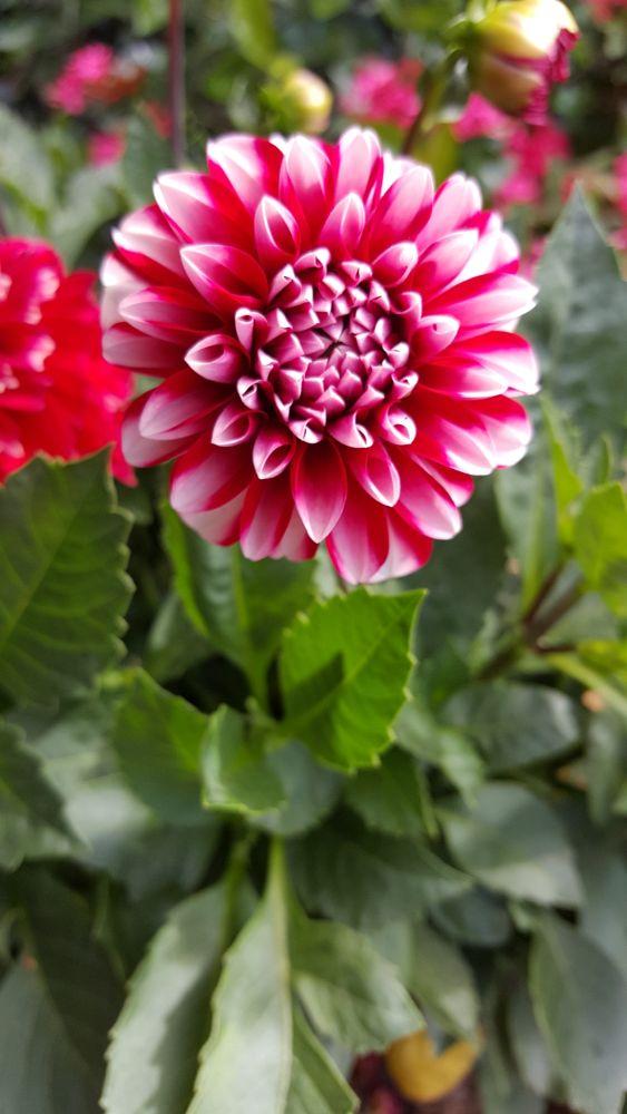 Photo in Macro #red flower #brisbane #australia