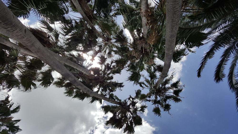 Photo in Nature #canopy #palms #brisbane queensland australi