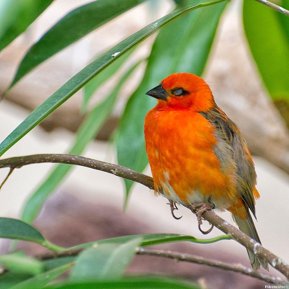 Photo in Animal #zoo #antwerp #bird #fibomatic