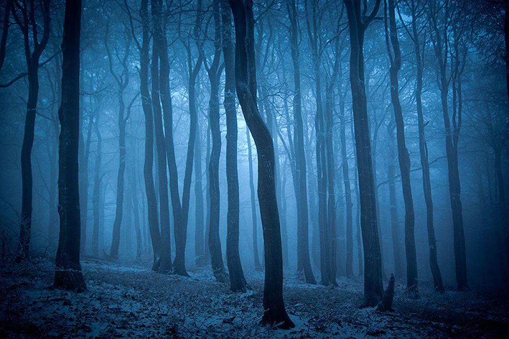Photo in Nature #europe #polska #poland #landscape #nature #krajobraz #forest #tree #trees #fog #foggy #mist #misty #scary #horror #thriller #dark #darkside #canon #sigma #blue #winter #cold #snow #light