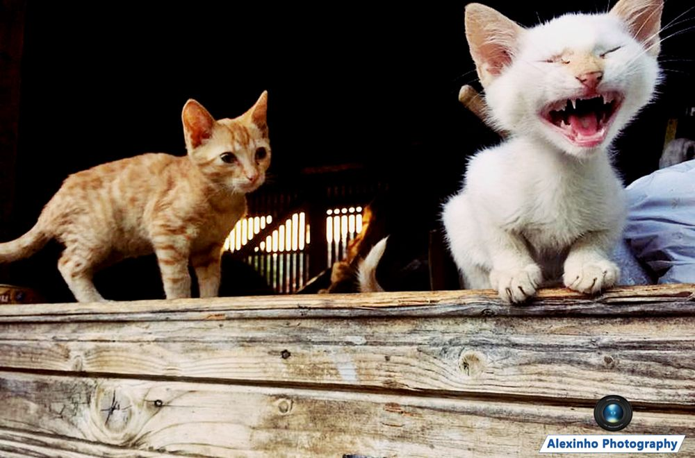Photo in Animal #funny cat #funny #cat