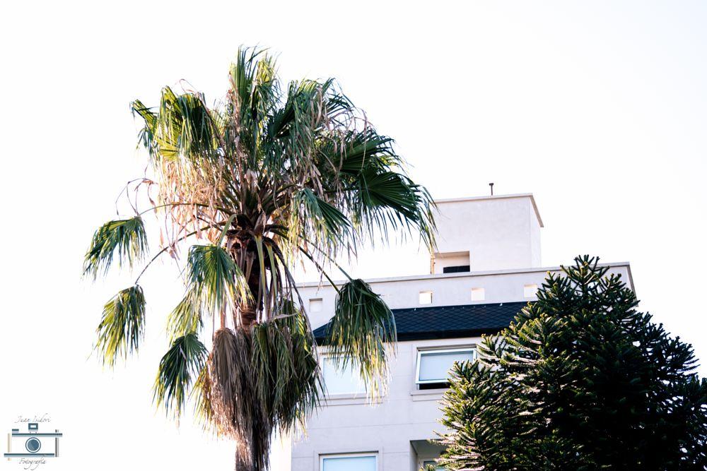 Photo in Street Photography #plants #street #high key
