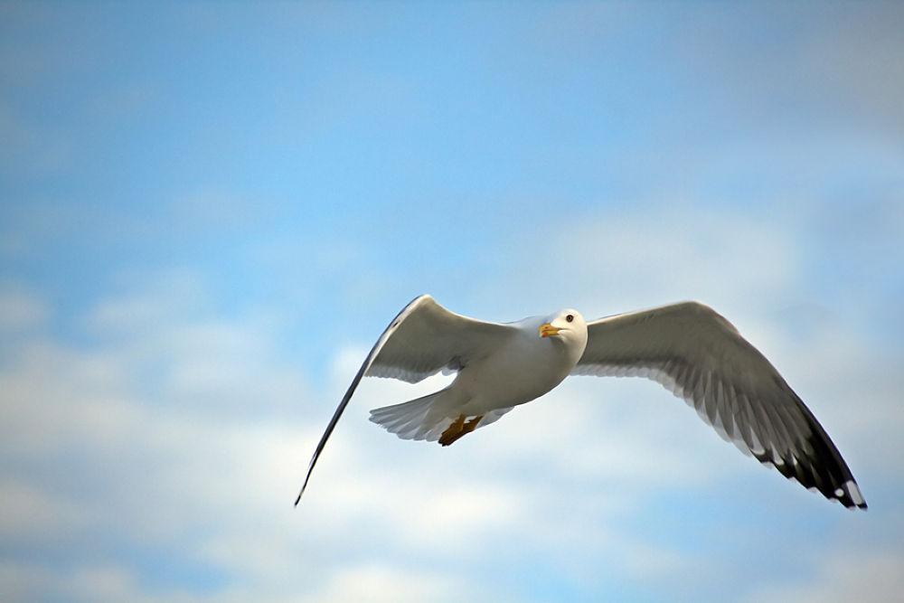 Photo in Nature #nature #birds #animals