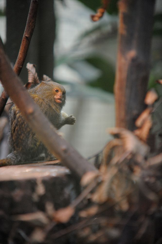 Photo in Animal #monkey #little #expression #stopped