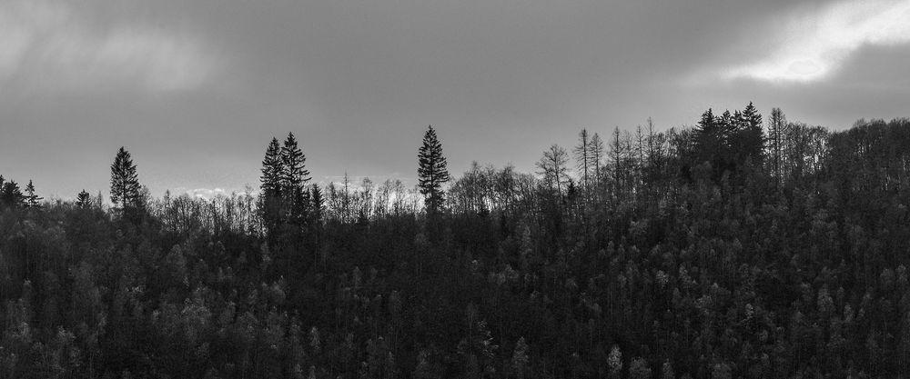 Photo in Landscape #mono #landscape #trees #black & white