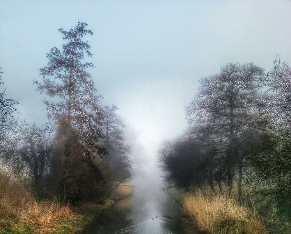Photo in Landscape #photography #atmosphere #mist #fog #nature #trees