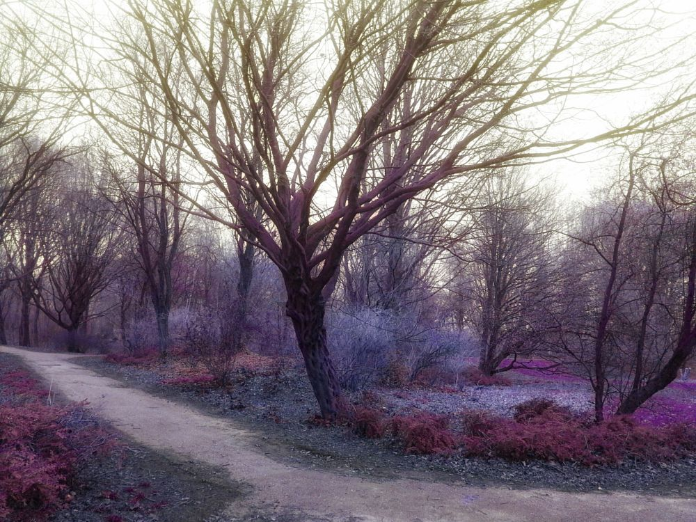 Photo in Random #trees #fantasy #nature #photography #forest #magic #surreal