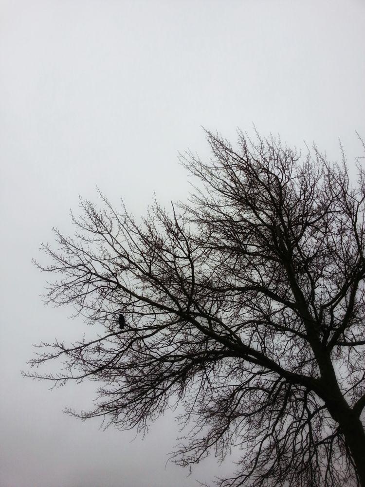 Photo in Nature #nature #silhouet #tree #crow #bird #photography
