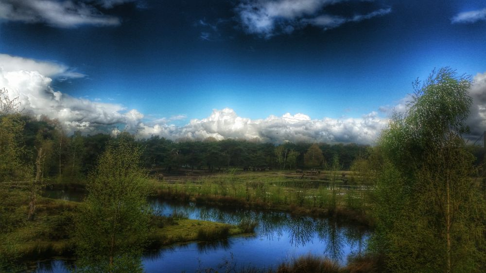 Photo in Landscape #photography wild life anima