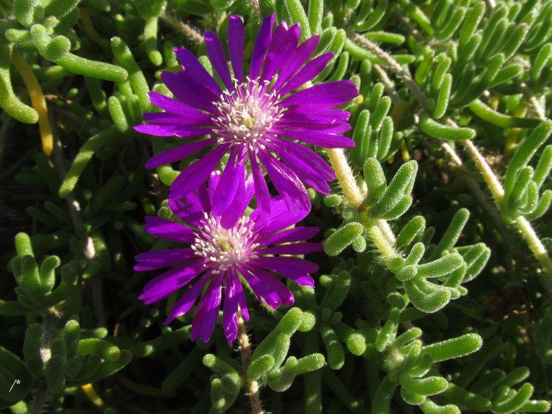 Photo in Nature #primavera #flores #suculentas