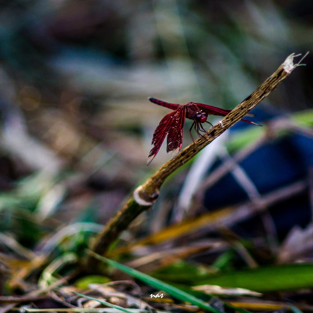 Photo in Nature #dragonfly #wild #animal