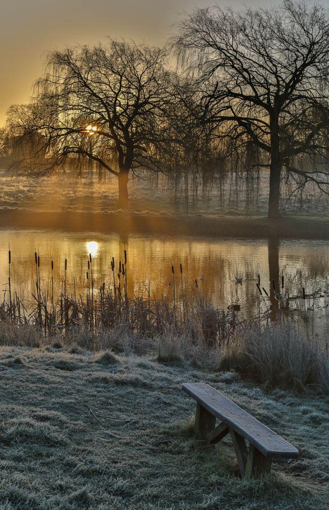 Photo in Landscape #hampton court #sunrise