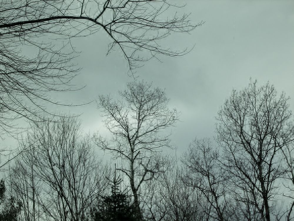 Photo in Landscape #sky #winter #december #branches #sillohutte