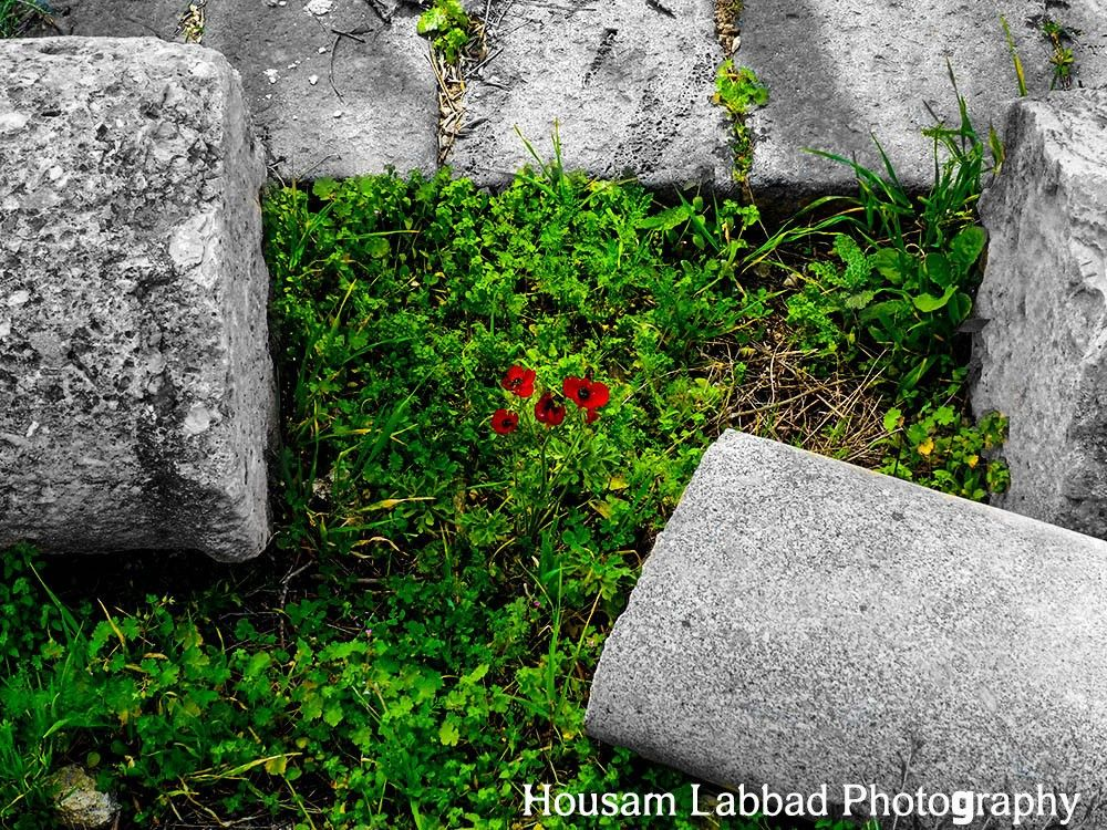 Photo in Cityscape #nature #columns #poppies #flower #history #tourism #greek #ruins