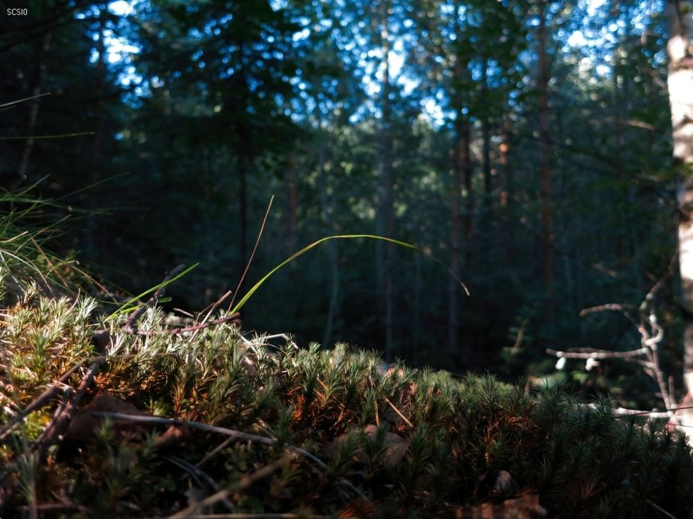 Photo in Landscape #mushroom #russia #forest #2013 #travel #tourism