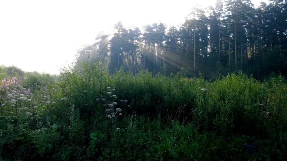 Photo in Nature #forest #lights #beam #nature #green #russia