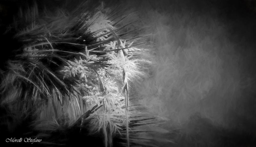 Photo in Nature #b/n