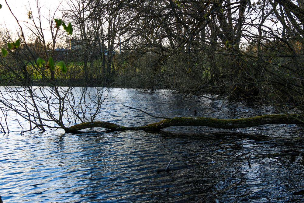 Photo in Landscape #dürnhof #castle #pond #church #lake