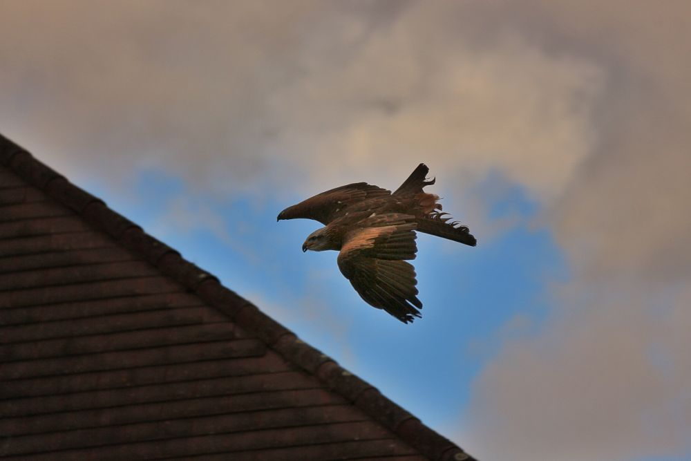 Photo in Landscape #eagle #birds #fly #falcons