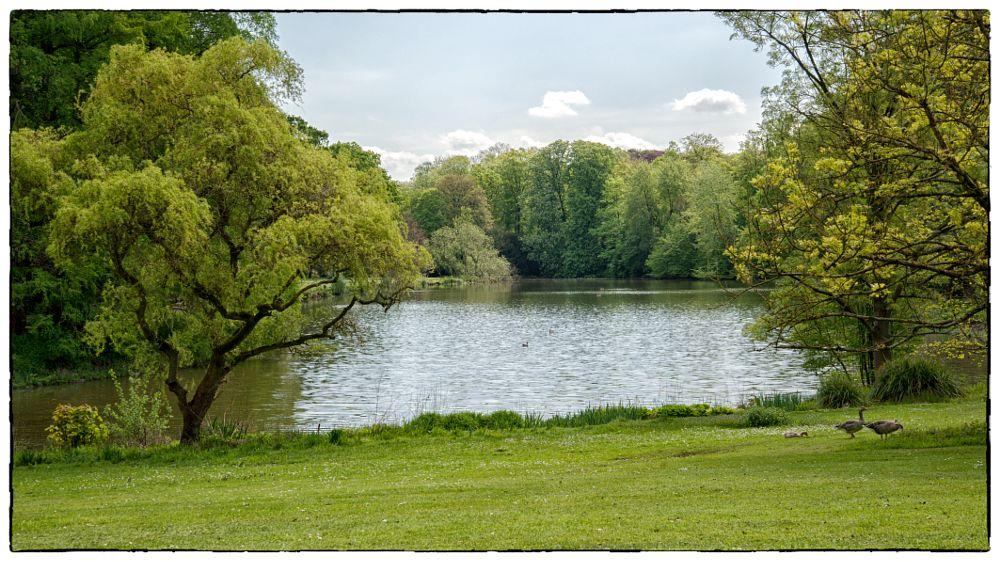 Photo in Landscape #rust #meise #groen #natuur #vijver