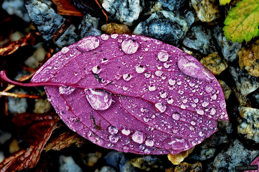 Photo in Nature #autumn #leaves